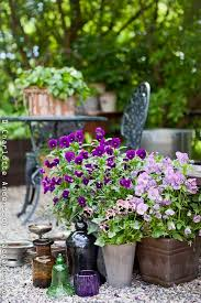 Summer Flower Garden Ideas - 354 best flowers pansy images on pinterest flowers burlap and