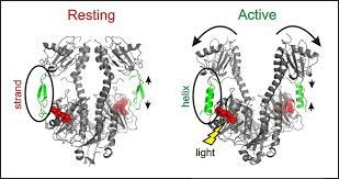 is light a form of energy the signal from light triggers biological action in bacteria