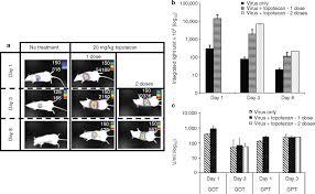 replication deficient adenovirus induces host topoisomerase i