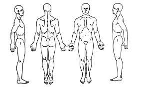 Human Anatomy Terminology Anatomical Terminology Thinglink