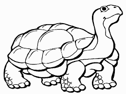 tortoise clipart coloring page pencil and in color tortoise