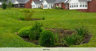 tennessee smart yards native plants cedar crossing subdivision rain gardens