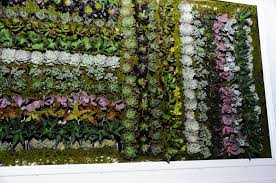 succulent green wall cynthiabeedesign com