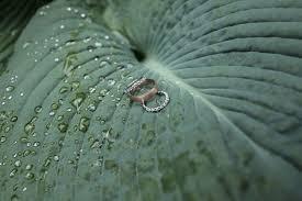 wedding bands cincinnati garden wedding with white green motif in cincinnati
