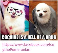 Cat Cocaine Meme - 25 best memes about cocaine is a helluva drug cocaine is a