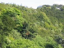 C'est quoi la canopée ? dans les arbres est la natures
