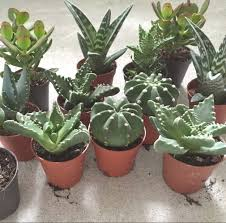 100 plants for office magnificent 25 tall office plants