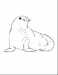 terrific sea coloring pages print sea animals