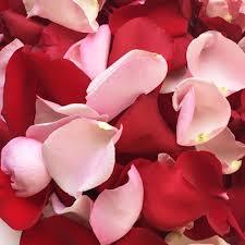 Rose Petals And Pink Rose Petals