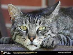 cat picture cat desktop wallpaper free wallpapers download