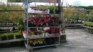 plant delivery carnon downs garden centre author at carnon downs garden centre