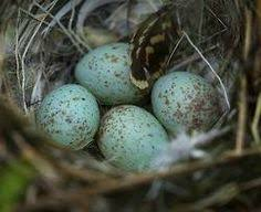 love the color of these eggs birds pinterest eggs egg and