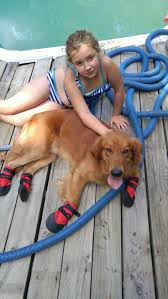Dog Booties Hardwood Floors 33 Best Ultra Paws Durable Dog Boots Images On Pinterest Dog