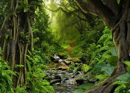 jungle backdrop tropical jungle with river photo backdrop vinyl cloth high quality