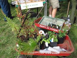 native plants seattle wnps cps 2017 spring native plant sale u0026 environmental fair