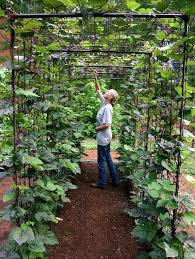 Diy Home Garden Ideas Vegetable Garden Design Diy Bean Trellis Gardenista