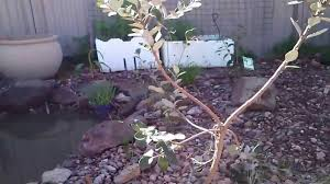 duck pond system self cleaning and ornamental how to make a