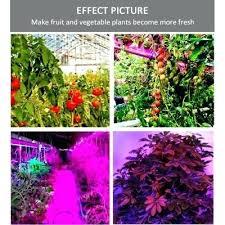 light and plant growth light and plant growth brainart club
