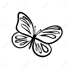 vector hand drawn butterfly black sketch on white background