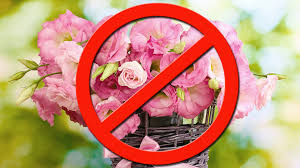 a flower you shouldn t why you shouldn t buy flowers on s day marketwatch
