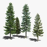 pine tree 3d models for turbosquid