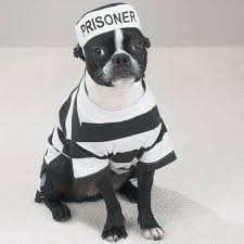 White Dog Halloween Costume Highly Detailed Quality Casual Canine Prison Pooch Costumes