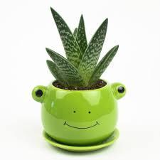 juicy pets diy animal pots for succulents juicykits com