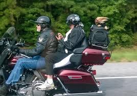 Funny Harley Davidson Memes - doggy transportation back of a harley davidson motorcycle