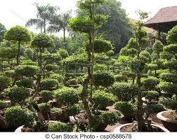 ornamental plants in a nursery in ho chi minh city