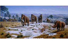 killed woolly mammoth bunch