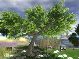 second marketplace box forest tree iii shadow animated ad