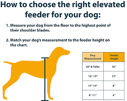 boxer dog growth chart pet supplies ourpets elevated bone feeder raised dog bowls