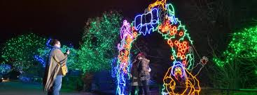 Denver Zoo Of Lights by Cu Night At Zoo Lights University Of Colorado Boulder