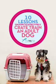 crate training 10 lessons on effectively crate training dog u2013 top dog tips