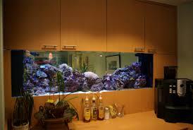 Aquarium Room Divider Recept Desk Room Divider Aquarium Blue Planet Aquarium