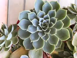 Succulents That Don T Need Light 9 Trendy Houseplants That Don U0027t Need Direct Sunlight Jungle Spaces
