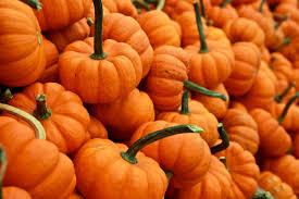 pumpkin king pumpkin patch