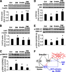 diabetic downregulation of nrf2 activity via erk contributes to