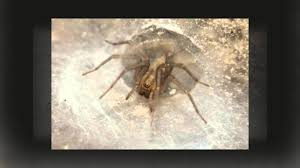 spiders for kids amazing animal books for young readers youtube