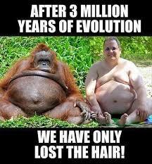 Random Funny Memes - lost the hair random funny memes v2