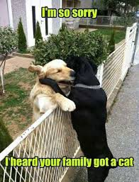 Cat And Dog Memes - best 50 funny cat vs dog memes images to prove who s boss