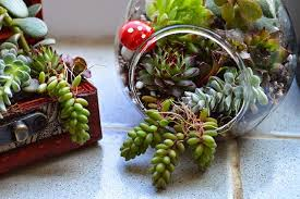 how to make a succulent terrarium garden living and making with