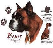 3d boxer dog t shirt boxer clothing shirts u0026 other clothes featuring boxers