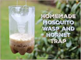 homemade mosquito traps and homemade wasp traps wasp traps wasp