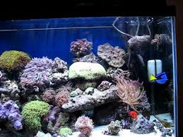 55 gallon aquarium light part 2 my 55 gallon marine salt water aquarium coral reef fish tank