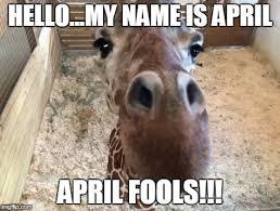 Giraffe Meme - image tagged in april giraffe imgflip