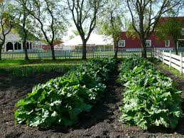 backyard vegetable garden combined with simple white fence and red