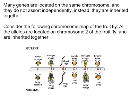 Chromosome Map Genetics Mendel And Beyond Ppt Download