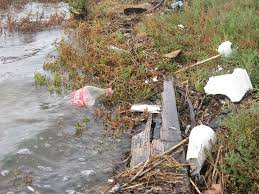 from your backyard to the bay it u0027s time to cleanup save the