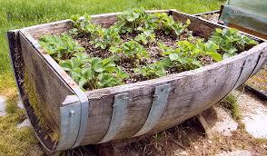 planters astonishing half barrel garden tubs half barrel garden